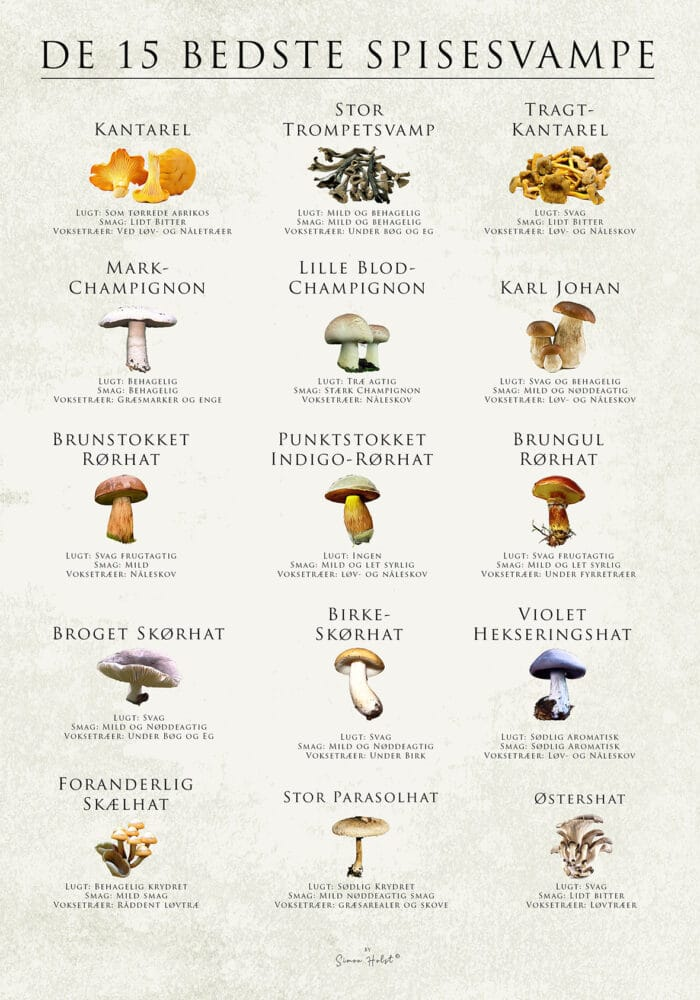 De 15 bedste spiselige svampe