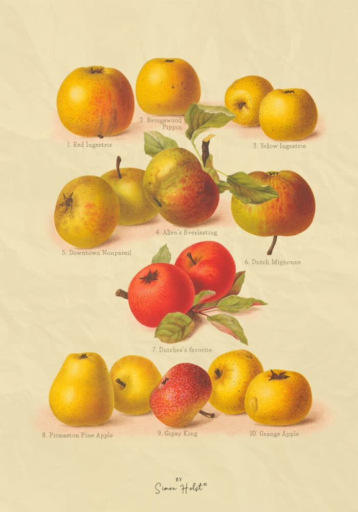 Æbler plakat