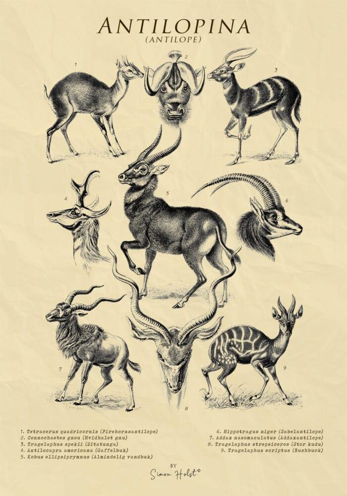 Antilopina Plakat
