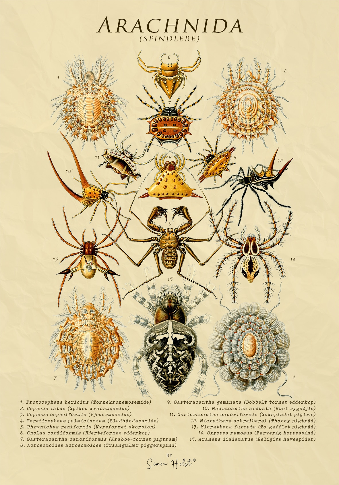 Arachnida - Spindlere - Plakat