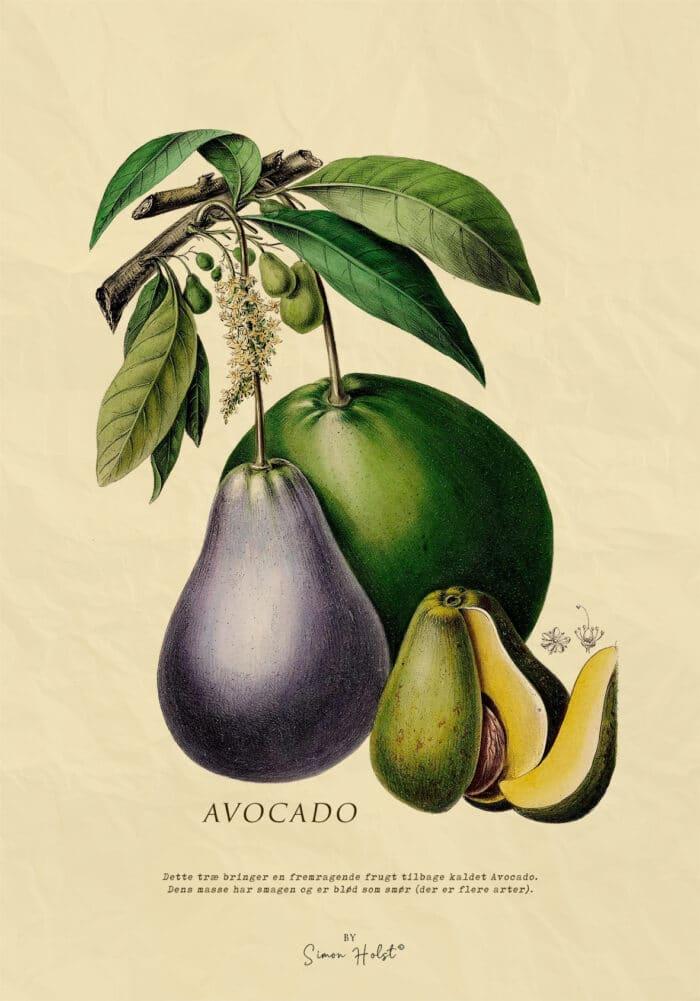 Avocado Plakat