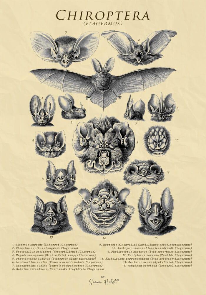 Chiroptera - Flagermus - Plakat