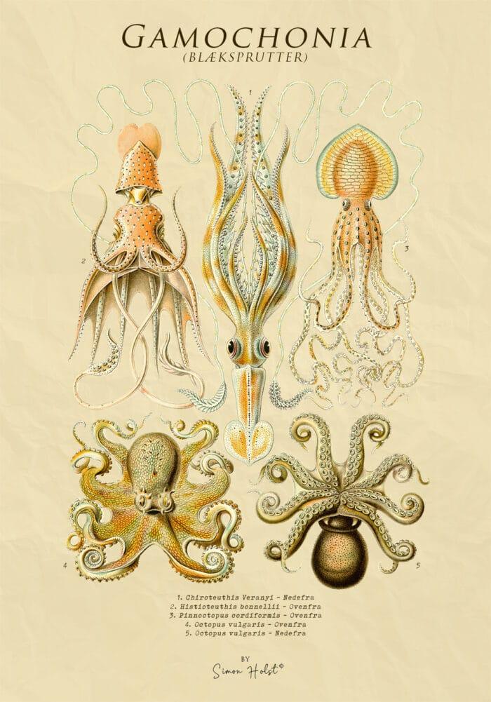 Gamochonia - Blæksprutter - Plakat