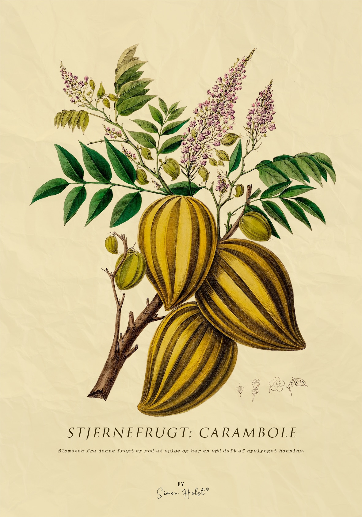 Stjernefrugt Plakat
