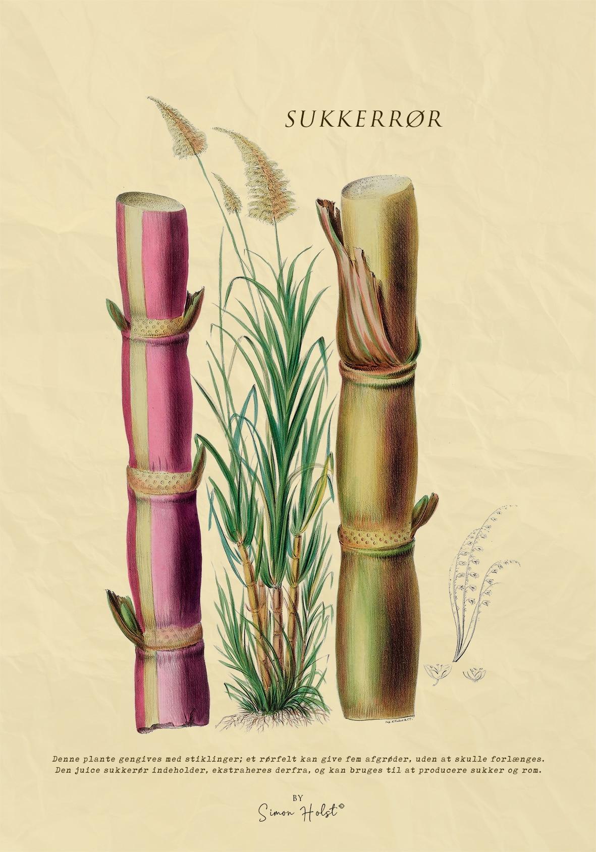 Sukkerrør plakat