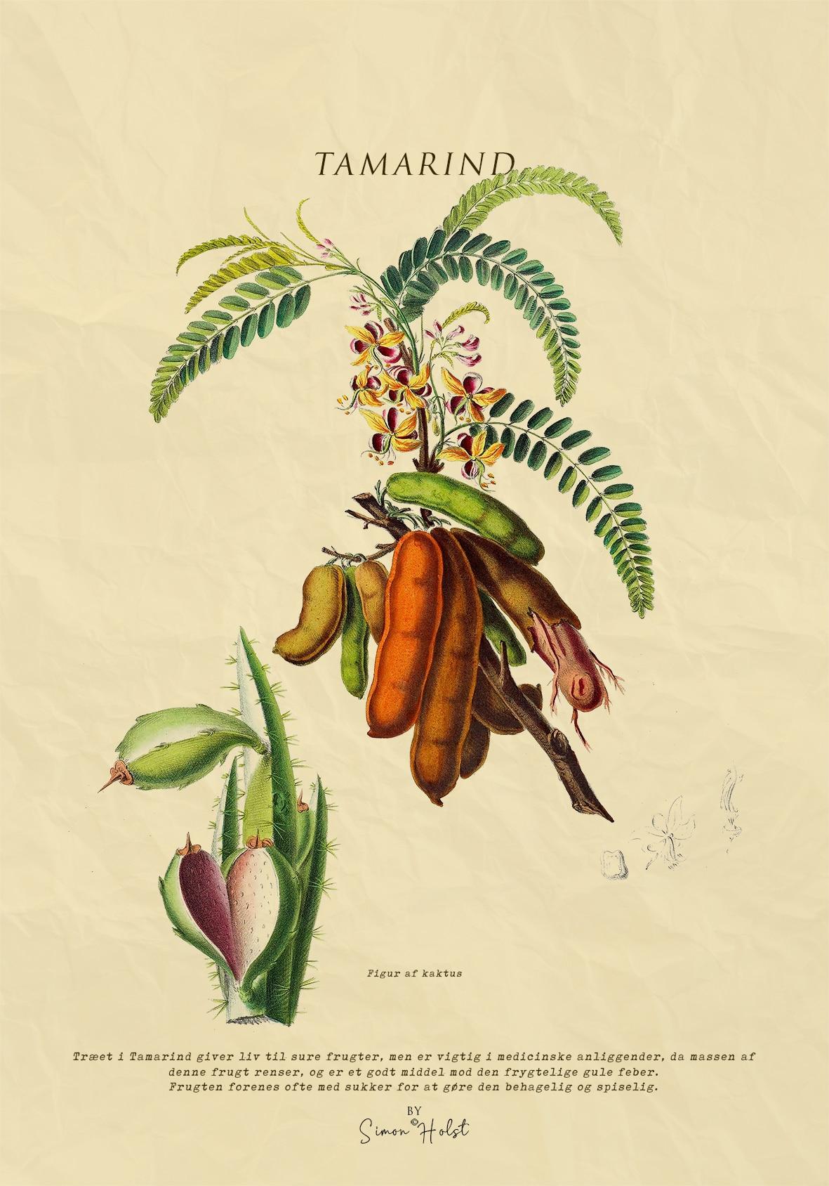 Tamarind Plakat