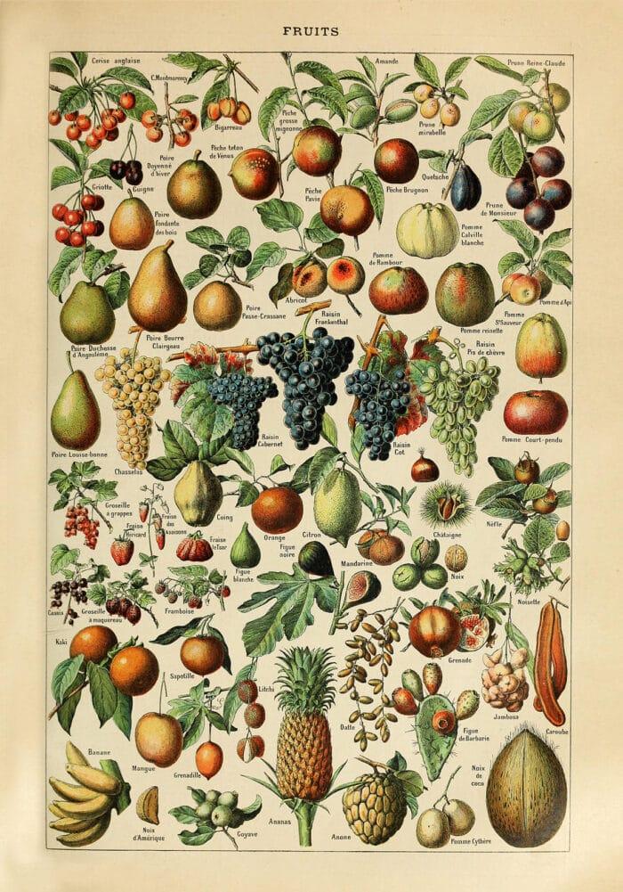 Fruits plakat