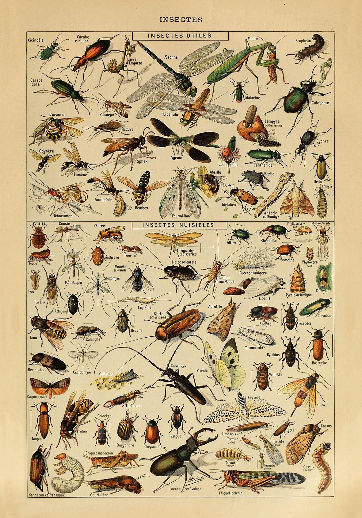 Insekt plakat