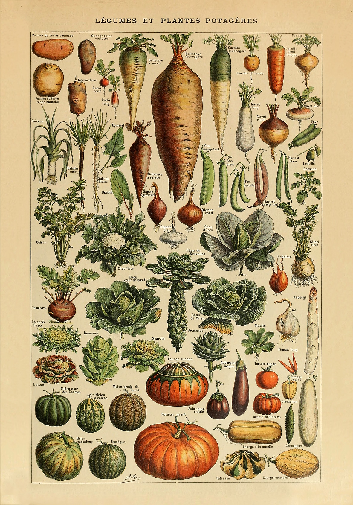 Legumes plakat