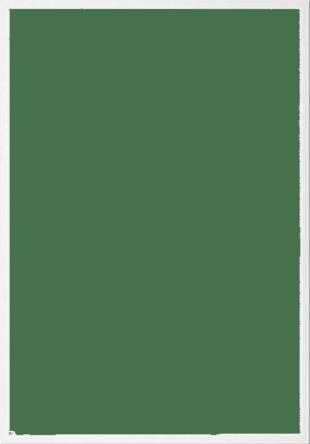 Hvid-egetrae
