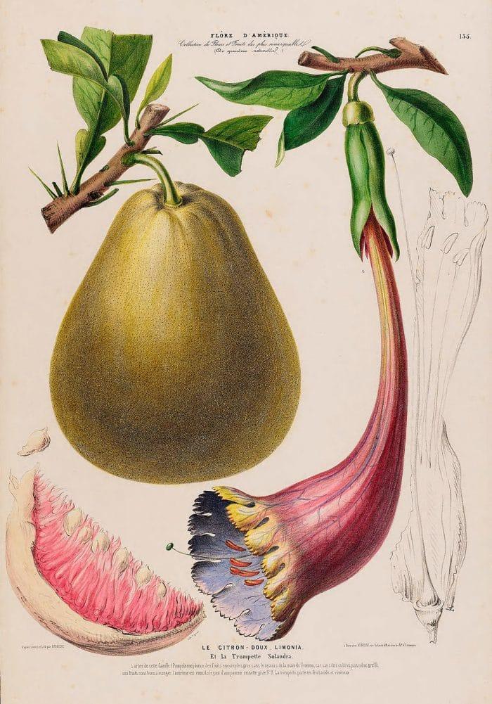 Citron Doux Limonia